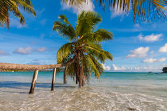 Tropical Palm Tree With Supports. Exquisite Anse Volbert beach in the Seychelles Stock Photography