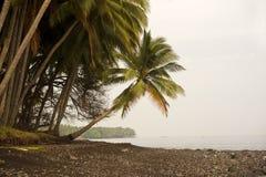 Tropical Palm Tree Stock Image