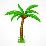Tropical palm tree Royalty Free Stock Photo