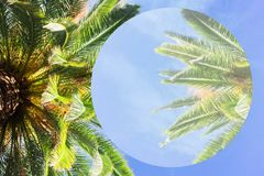 Tropical palm tree. Fresh leaves border on blue sky abstract summer background Stock Images
