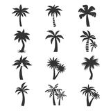 Tropical palm tree vector icons set. Silhouettes on the white background Royalty Free Stock Photos