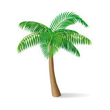 Tropical palm tree.  vector illustration. Stock Photos