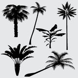 Tropical palm tree vector silhouettes isolated on white background Stock Image