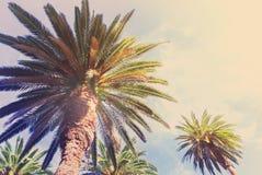 Tropical palm tree Royalty Free Stock Photos
