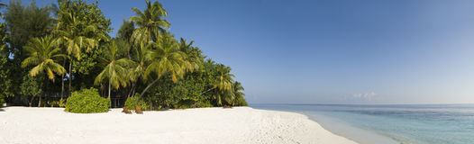 Tropical palm tree and white sand Maldives. Panoramic view of palm tree and white sand beach of Ihuru Island Maldives in Malé North atoll and blue lagoon Royalty Free Stock Image