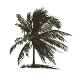 Tropical palm tree for your design Stock Photo