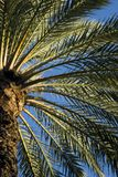 Tropical Palm trees Royalty Free Stock Images