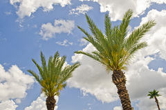 Tropical palm trees Royalty Free Stock Photos