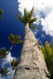 Tropical Palm Trees Stock Photo