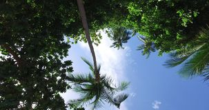 Tropical palm trees against the background. Of the sky stock footage