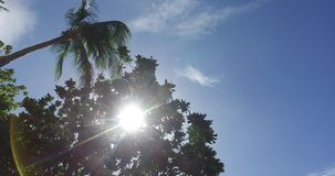 Tropical palm trees against the background. Of the sky stock video footage