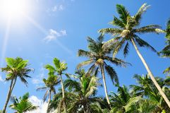 Palm trees against the blue sky and sun Stock Image
