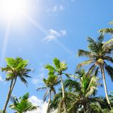 Palm trees against the blue sky and sun Stock Photography