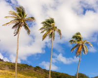 Tropical palm trees against a blue sky Royalty Free Stock Image