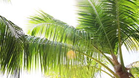 Tropical palm trees against the light, white space stock video footage