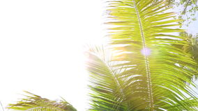 Tropical palm trees against the light, white space stock video
