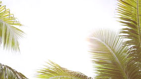 Tropical palm trees against the light with white space background stock video