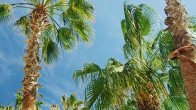 Tropical palm trees against the sky.  stock video footage