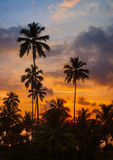 Tropical palm trees against the sky at sunset Stock Image