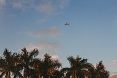 An airplane flying over palm trees stock photo