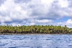 Tropical palm trees along shore Royalty Free Stock Photo