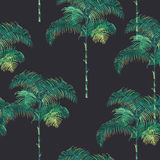 Tropical Palm Trees Background Stock Photo