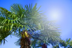 Tropical palm trees backlit with sun ray. Summer travel holidays vacation. Colorful concept photo. Stock image stock image