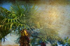 Tropical palm trees backlit with sun ray. Summer travel holidays vacation concept. Colorful photo in retro vintage grunge style. Stock image royalty free stock photo