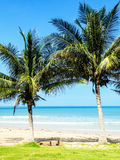 Tropical palm trees beach Royalty Free Stock Photography