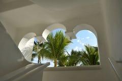 Tropical Palm Trees Stock Photos