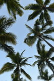 Tropical Palm Trees Stock Photography