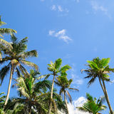 Tropical palm trees and blue sky Stock Photography