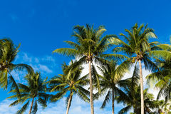 Tropical palm trees in the blue sunny sky Stock Photo