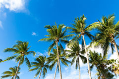 Tropical palm trees in the blue sunny sky Royalty Free Stock Photos