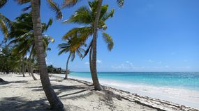 Tropical palm trees on caribbean beach in Dominican Republic. Blue Skys, tropical palm trees on caribbean beach in Dominican Republic Stock Photography