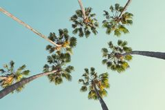 Tropical palm trees on clear summer sky background. Low Angle View. Toned image Royalty Free Stock Photos