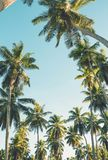Tropical palm trees on clear summer sky background. Toned image Stock Photography