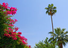 Tropical Palm Trees and Flowers Royalty Free Stock Photo