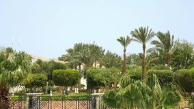 Green oasis in the middle of the desert. Tropical palm trees and green bushes and trees in the wind under blue sky with mountains in background. Green oasis in stock footage