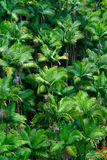 Tropical palm trees green cluster Stock Image