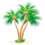Tropical palm trees. Illustration on a white background Royalty Free Stock Photos