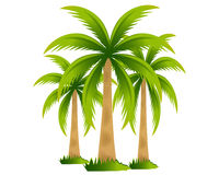 Tropical palm trees. Isolated on white Royalty Free Stock Image