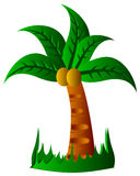 Tropical palm trees Stock Image