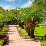 tropical palm trees and lawn Royalty Free Stock Photography