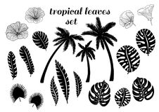 Tropical palm trees, leaves flowers silhouettes set. Vector Stock Photos