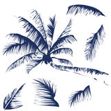 Tropical palm trees and leaves Stock Photo