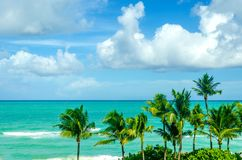 Tropical Miami beach palms near the ocean Royalty Free Stock Photo