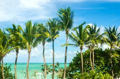 Tropical Miami Beach Palms near the ocean Stock Photos