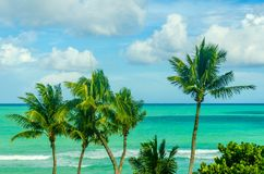 Tropical Miami Beach Palms near the ocean Royalty Free Stock Images