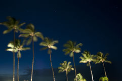 Tropical Palm Trees at Night. Underneath the blue sky and stars Stock Photography